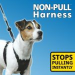 HALTI NON-PULL HARNESS LARGE